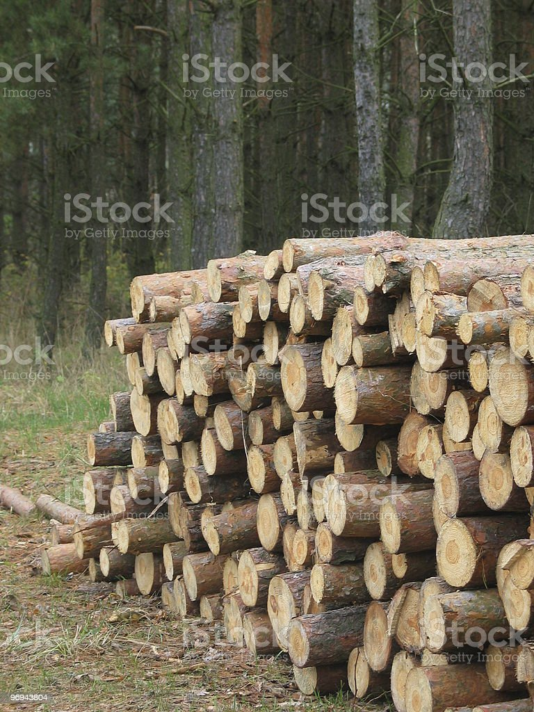stack of logs in a forest royalty-free stock photo