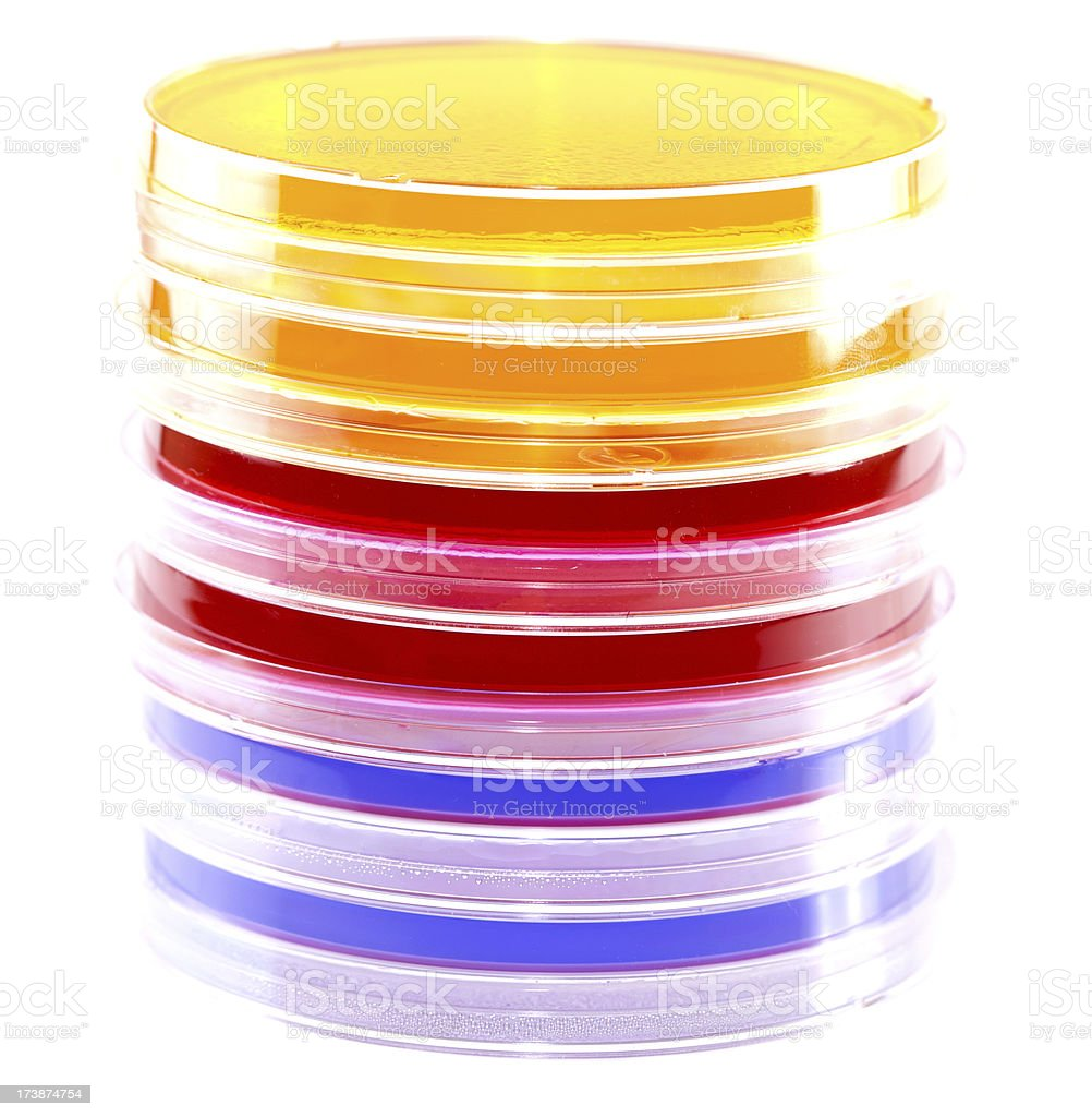 Stack of Petri Dishes / Plates royalty-free stock photo