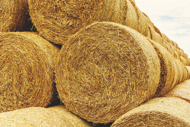 Stack of straw bales stock photo