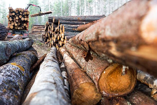 pila di legname - industria forestale foto e immagini stock