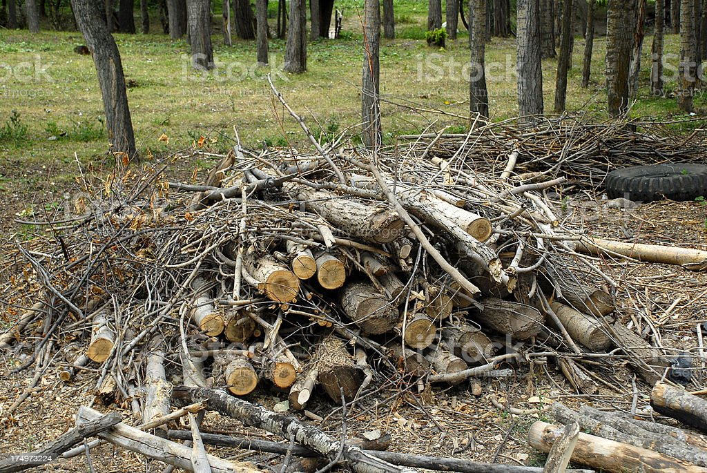 Stack Of Tree (Click for more) royalty-free stock photo