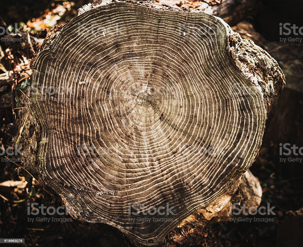 Stack of tree stump for background stock photo