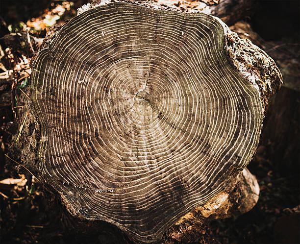 stack of tree stump for background - woodcut stock photos and pictures