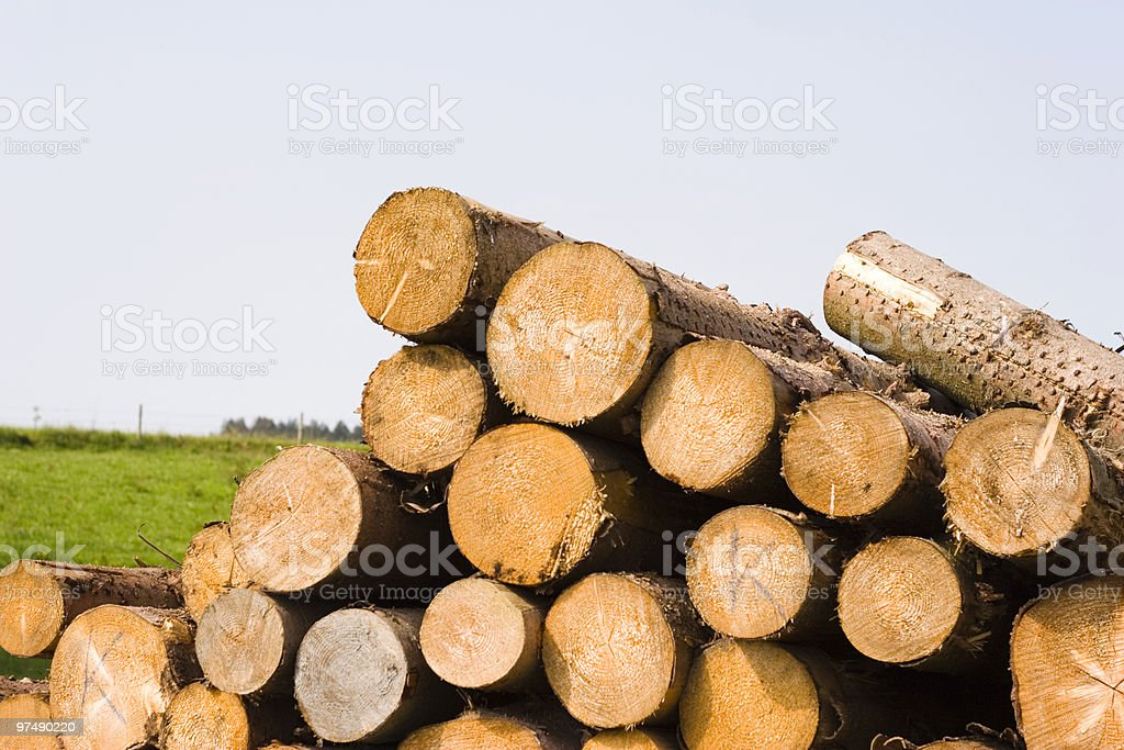 Stack of tree truncs royalty-free stock photo