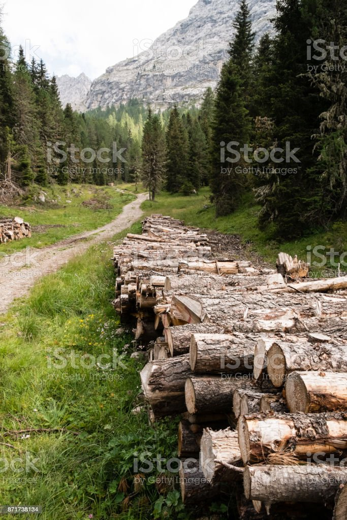 Stack of trees stock photo