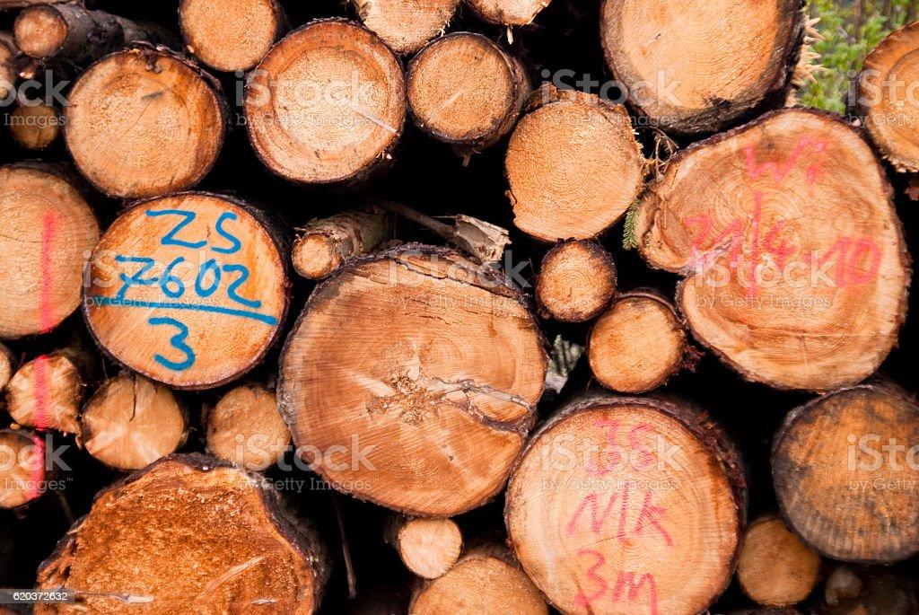 Sterta drewna  zbiór zdjęć royalty-free