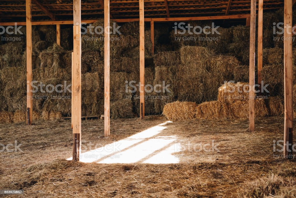 stacked hay in agricultural stall at farmhouse stock photo