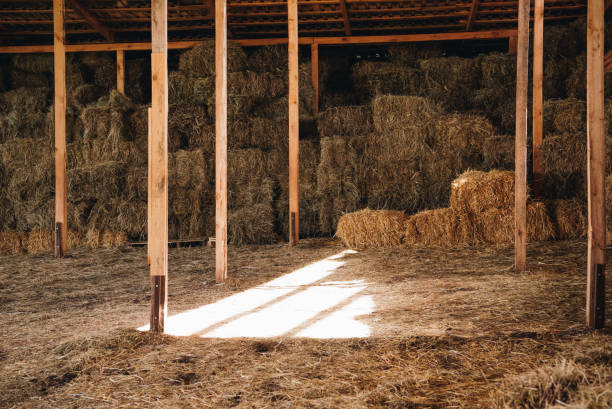 stacked hay in agricultural stall at farmhouse stacked hay in agricultural stall at farmhouse hay stock pictures, royalty-free photos & images