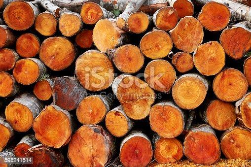Fresh stacked logs of alder trees.