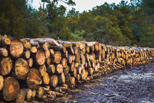 Stacked logs Stacked logs arranged in a row in jungle myitkyina photos stock pictures, royalty-free photos & images