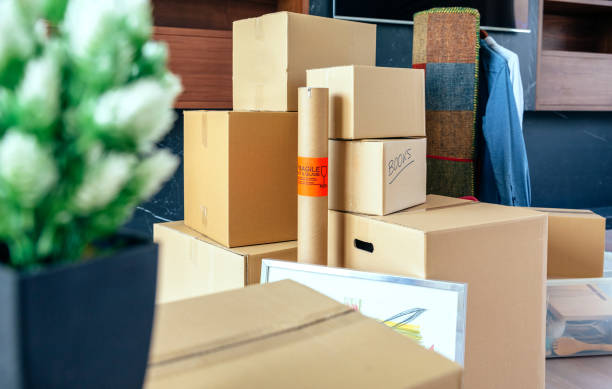 Stacked moving boxes and plant - foto stock