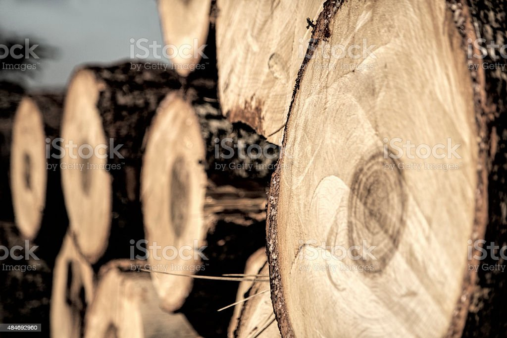 Stacked pine logs stock photo