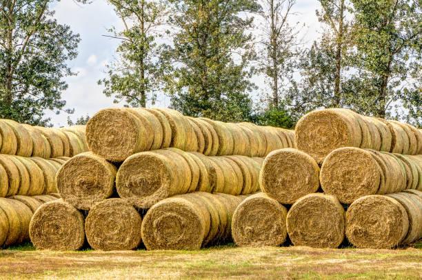Gestapelte straw bales – Foto