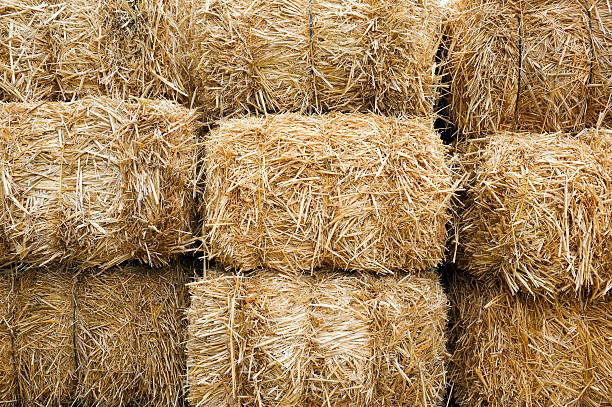 Stacked Straw Hay Bails Stacked Straw Hay Bails hay stock pictures, royalty-free photos & images
