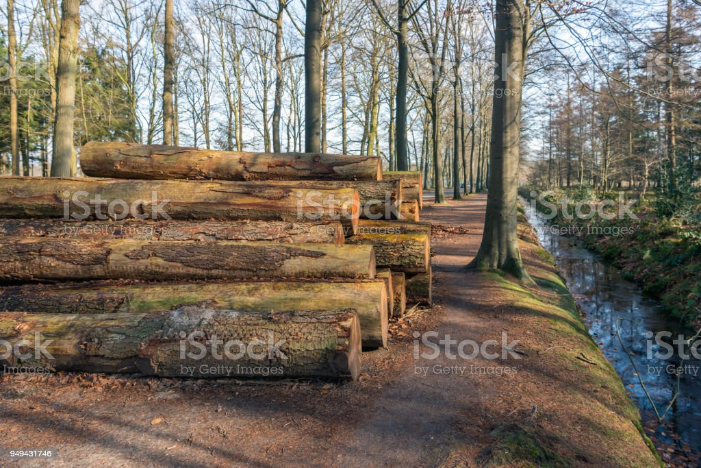 Stacked tree trunks waiting for transport to the sawmill stock photo