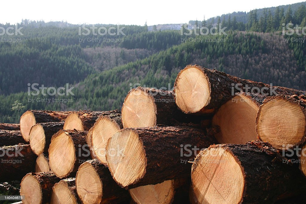 Stacked up cut logs in the countryside stock photo