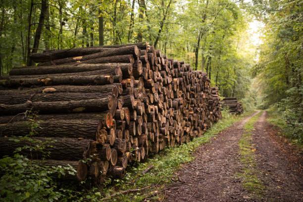 gestapelte Holz im Wald, Deutschland – Foto