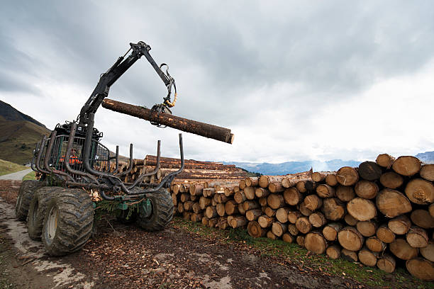 stacking cut logs - logging equipment stock photos and pictures