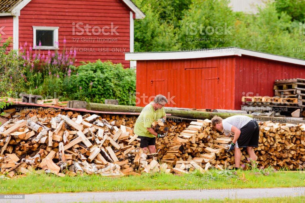 Stacking firewood stock photo