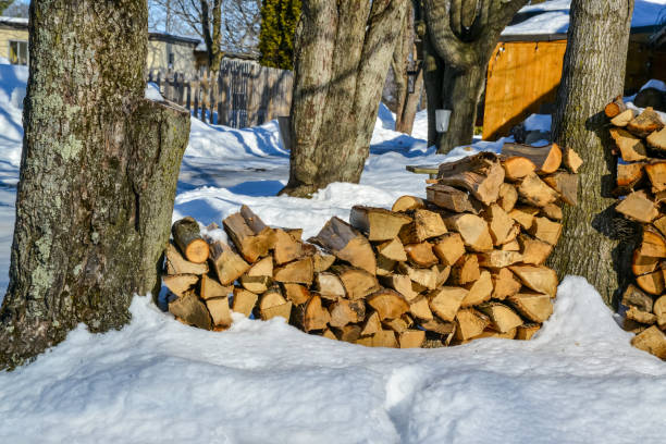 stacking of wood near a sugar bush in winter stock photo