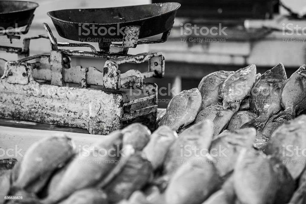 Stacks of fish to be weighed stock photo