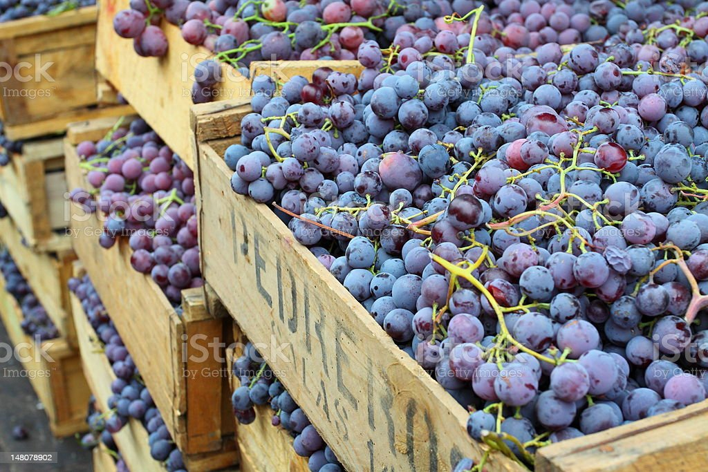 Stacks of grapes in wooden crates stock photo