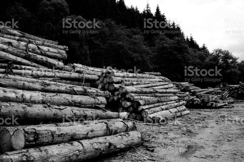 Stacks Of Logs In Forest Against Cloudy Sky royalty-free stock photo
