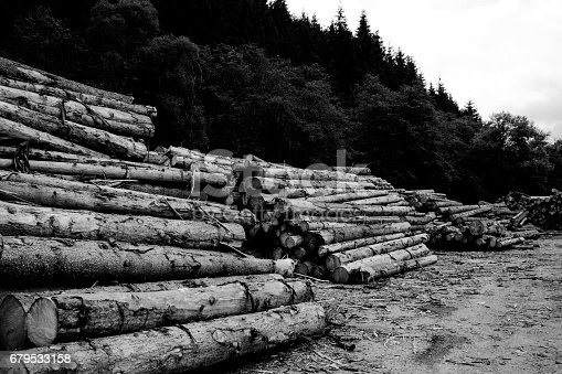 A photograph of stacks of logs in the forest against the cloudy sky.