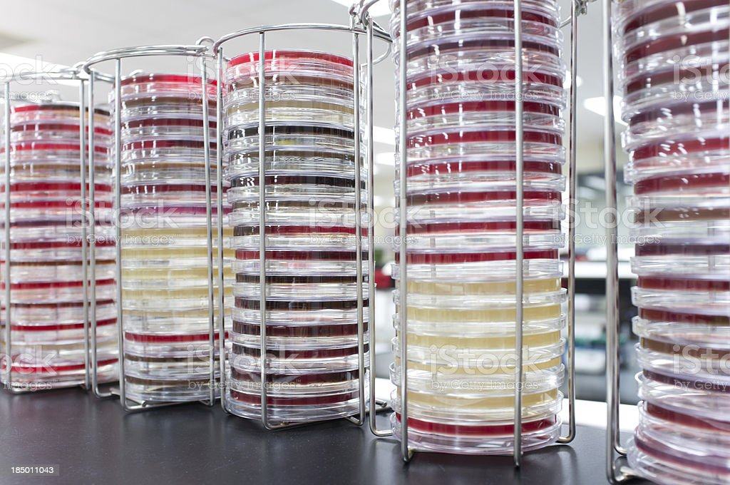 Stacks of Petri dishes royalty-free stock photo
