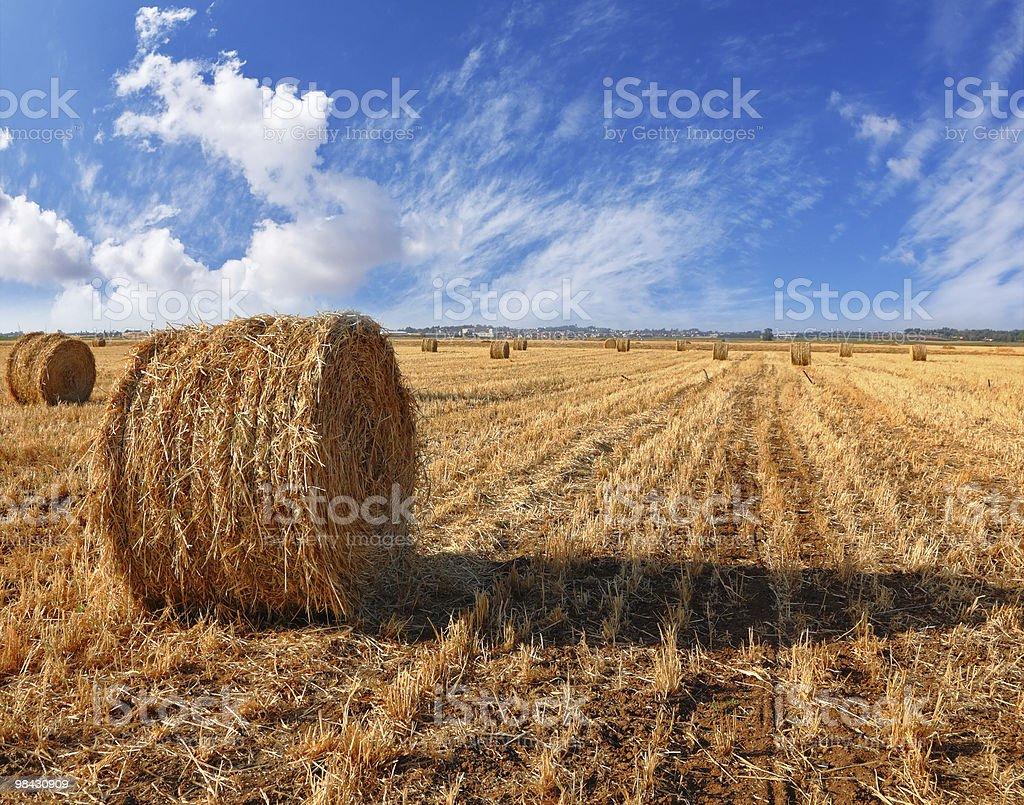Pile di erba su un tramonto foto stock royalty-free