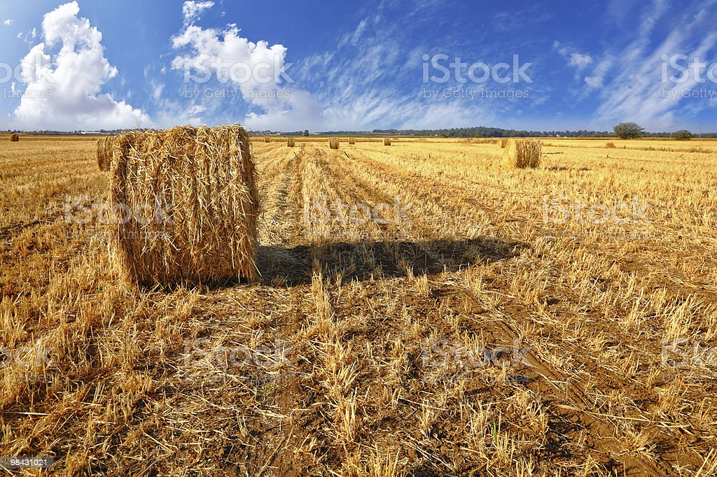 Stacks of the yellow grass on a sunset royalty-free stock photo