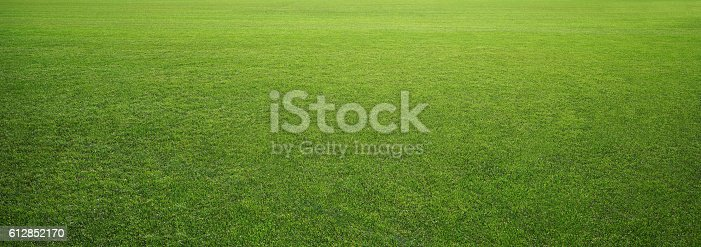 Photo of the stadium grass