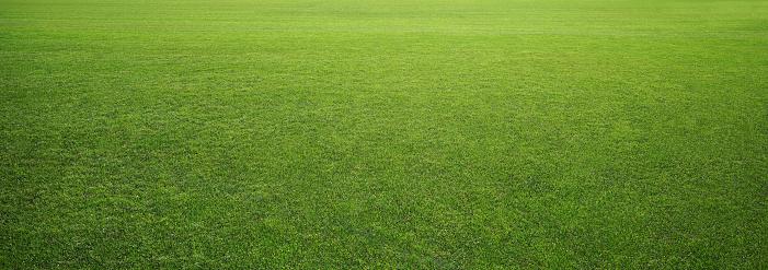 Photo of the stadium grass
