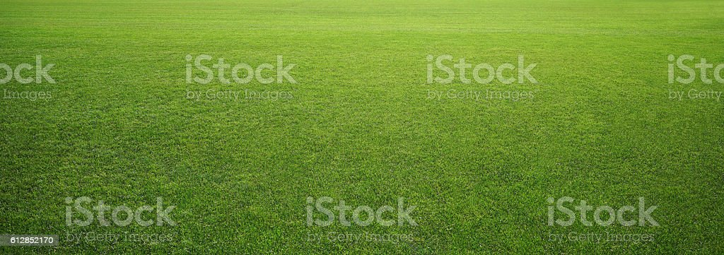 stadium grass stock photo