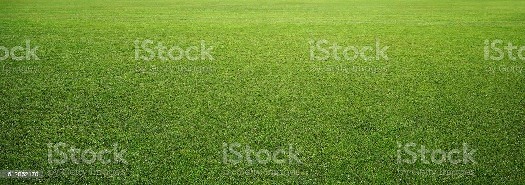 Estadio de hierba - foto de stock