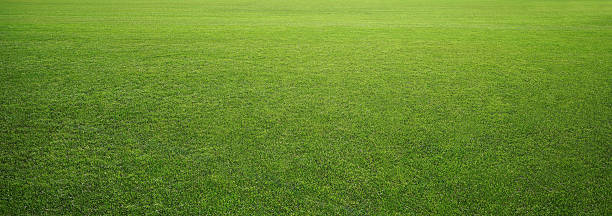 stadium grass Photo of the stadium grass lawn stock pictures, royalty-free photos & images