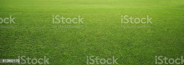 Photo of stadium grass