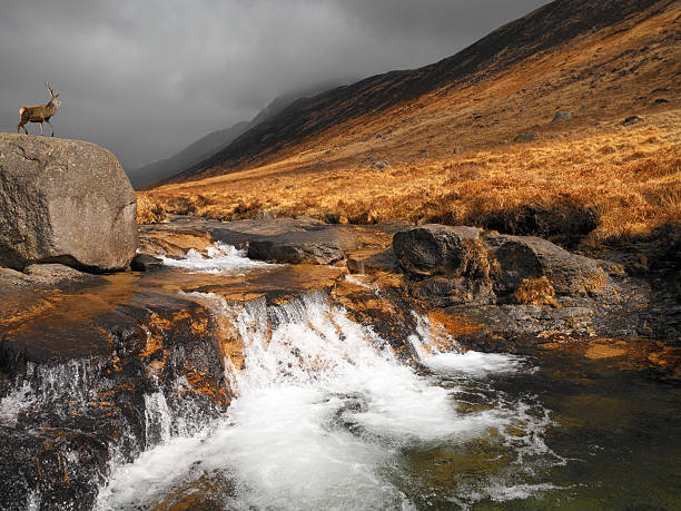 stag in glen rosa - isle of arran - scotland - outcrop stock pictures, royalty-free photos & images