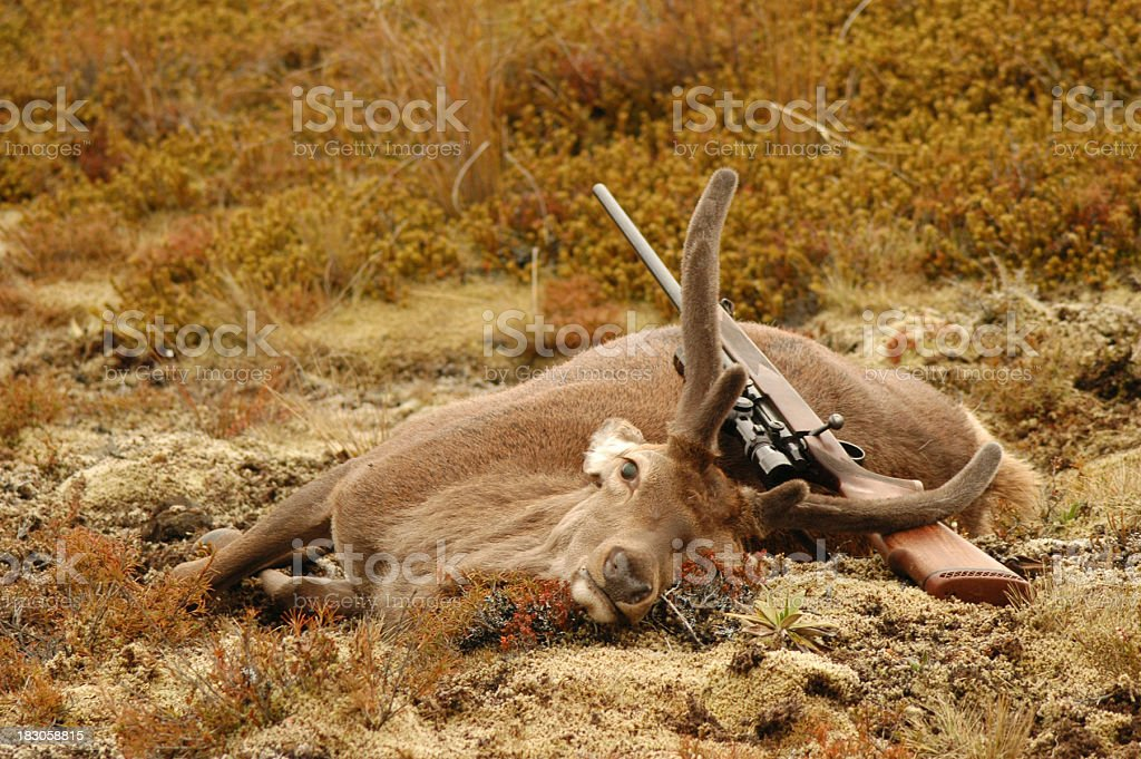 stag royalty-free stock photo