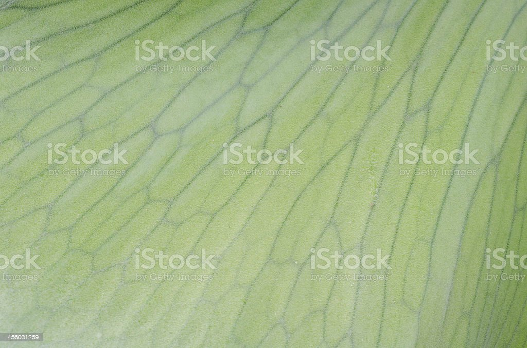 staghorn fern laves background stock photo