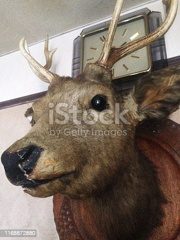 Deer, Taxidermy, Animal, Wall - Building Feature, Stag