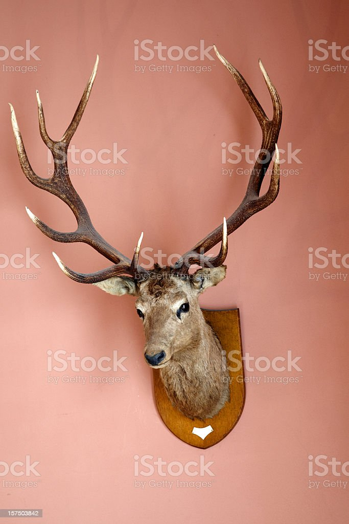 Stag's head mounted on a wall stock photo