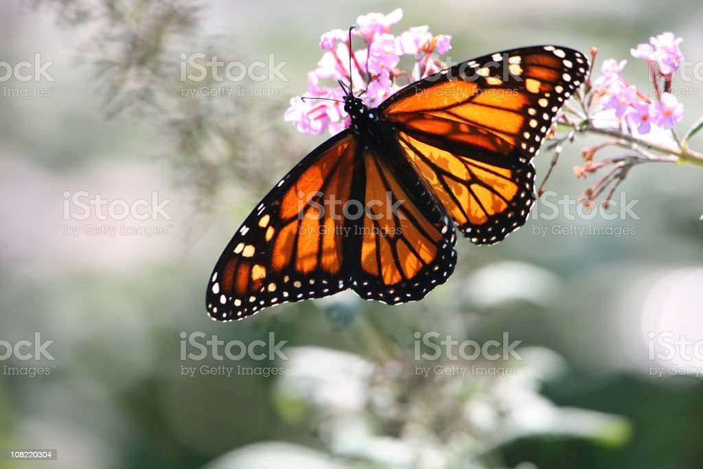 stained glass butterfly royalty-free stock photo