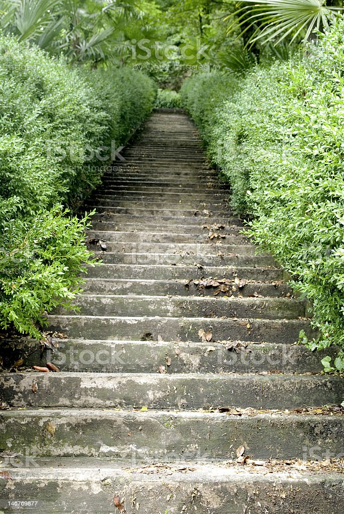 staircase in a woodland royalty-free stock photo