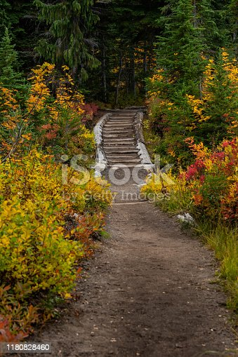 Staircase on Wide Dirt Trail Through Forest in Fall