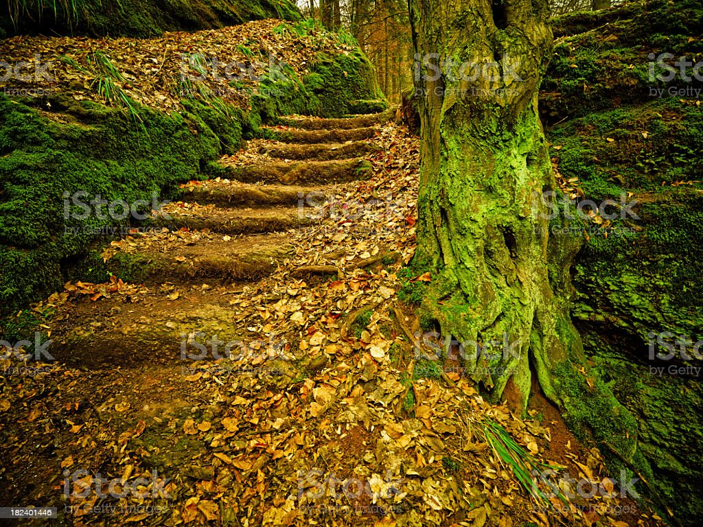 Stairs In Fairy Tale Forest royalty-free stock photo