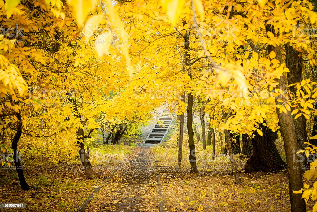 Stairs in the Fall royalty-free stock photo