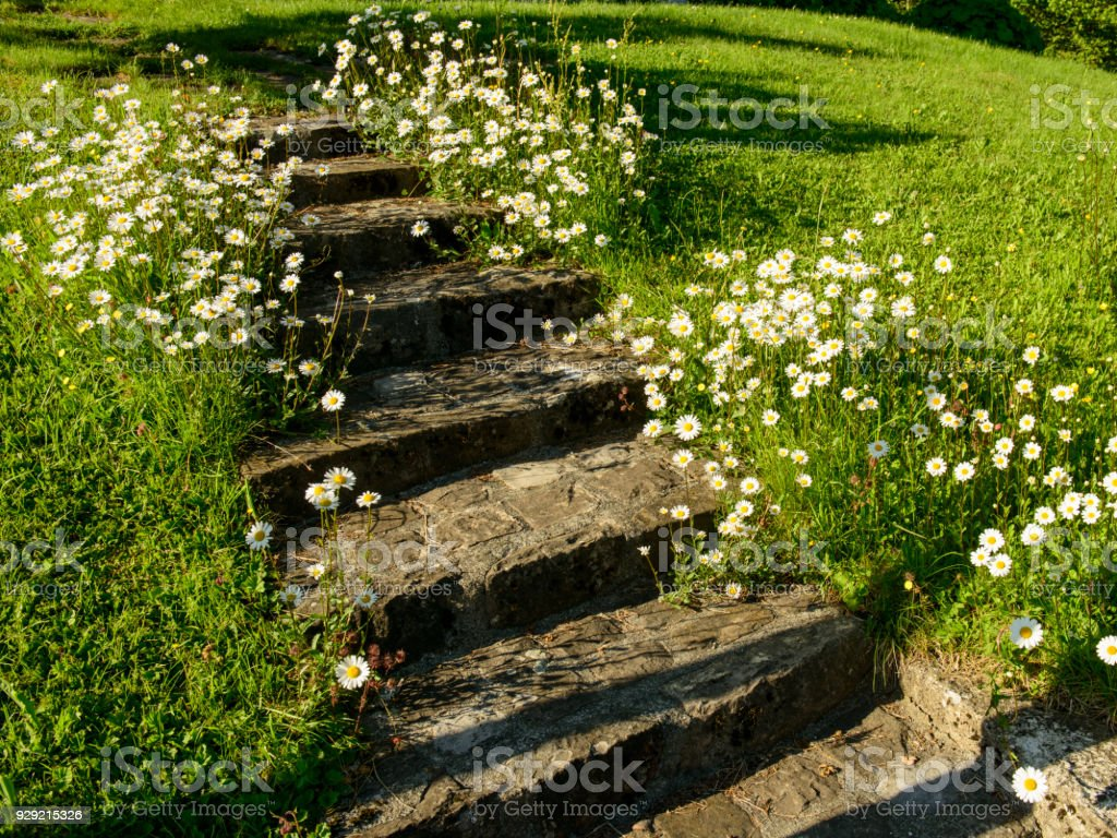stairs in the garden with blooming daisies beside stock photo