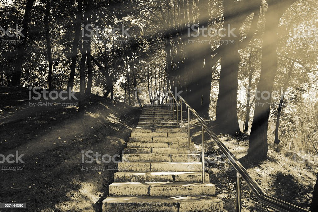 Stairs in the park stock photo