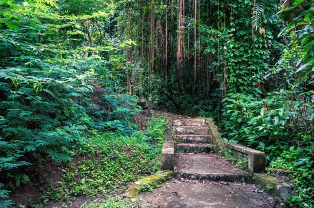 treppe im tropischen wald - baumgruppe stock-fotos und bilder